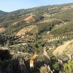 Pedra Letreira main