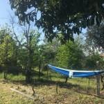 hammock mea